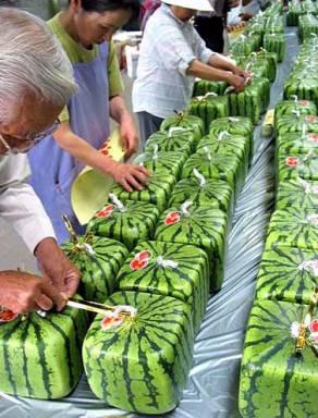 Sqare Watermelon