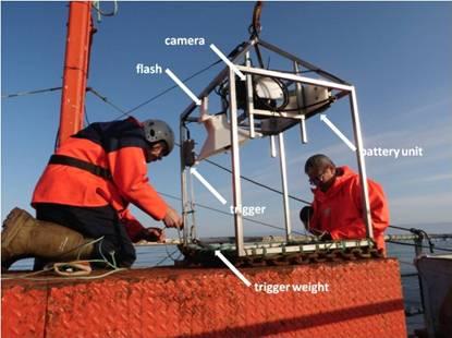 News from circumpolar biodiversity monitoring program for Sustainable fishing definition