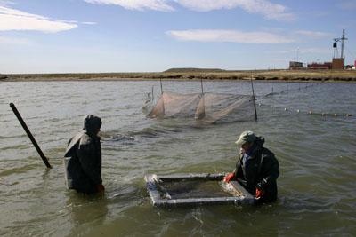 Fish sampling crew, Photo: BP