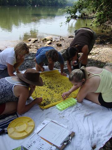 Searching for macro invertebrates.