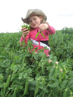 Granddaughter picking peas