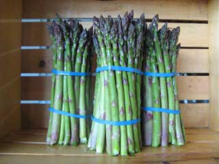 Asparagus No Label