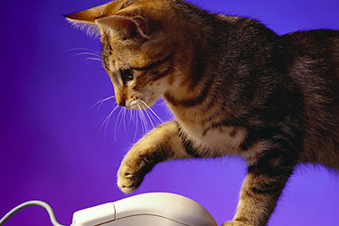 kitten and comp mouse