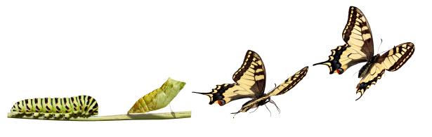 Evolving Butterly