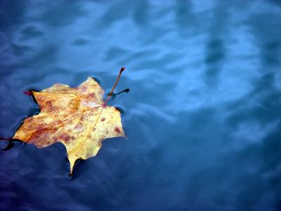 Autum leaf in water