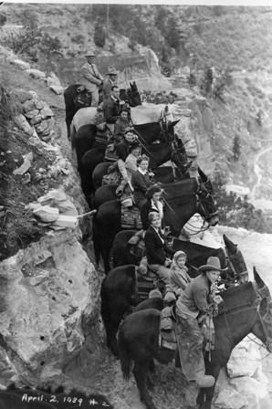 Mule Ride Grand Canyon Vintage