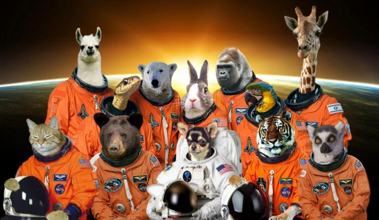 Zoo in space