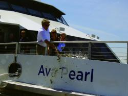 Ava Pearl christened at Launch Party