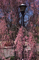 Spring in South County, Rhode Island