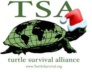 santa_turtle