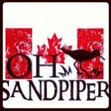 Oh Sandpiper