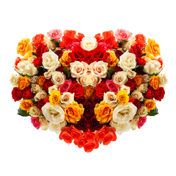 National Rose Month - June