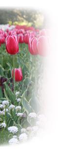 MBSR Spring