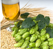 Craft Beer Hops