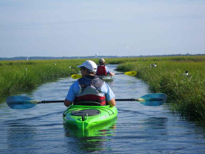 kayaking through bird lane
