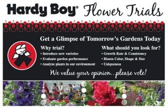 Hardy_boy-poster
