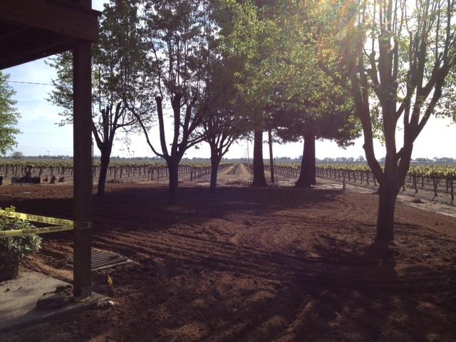 Lawn Refurbishment