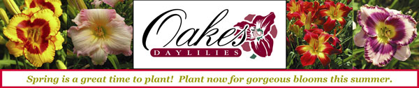 Oakes Daylilies - Spring is a Great Time to Plant