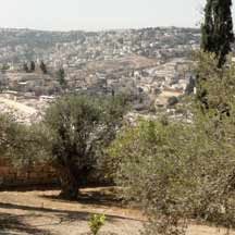 Trees around Jerusalem (ICEJ Staff Photograph)
