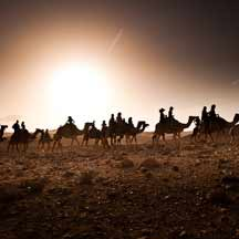 Camels in the desert (ICEJ Staff photograph)