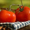 Fragrance Oil - Sun Ripened Tomato