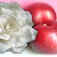 Fragrance Oil - Plum Blush