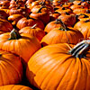 Fragrance Oil - Pumpkin Pickin