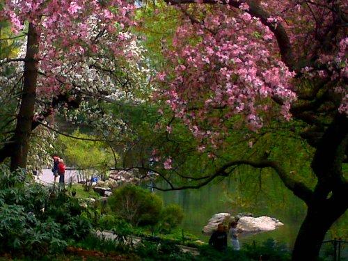 april blossoms