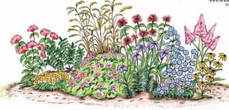 rain garden drawing