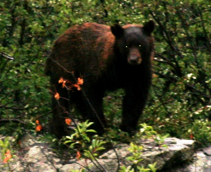 bear pic 2