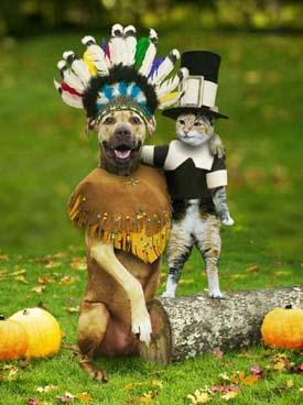 Funny_Turkey_1