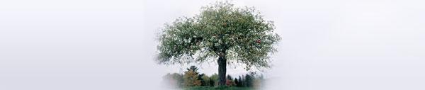 old-tree-header.jpg