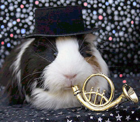 Guinea pig wearing hat, and tooting a mini French horn