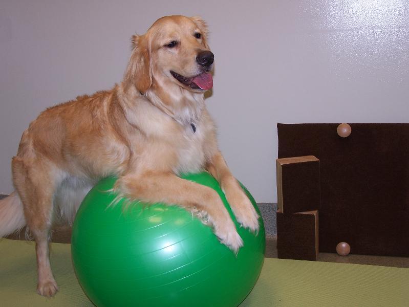 Rehab ball