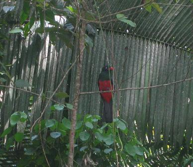 2 Trogons were also nearby observers of the divers
