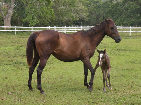 Newborn Baby of Montana and Jet Dream