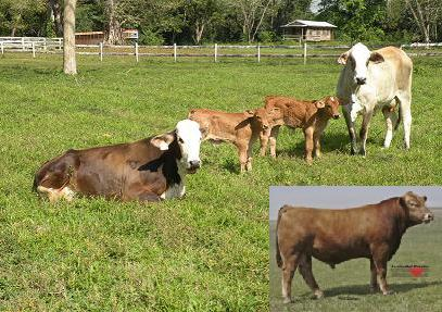 Calves born 2009 from Real Deal (corner picture)