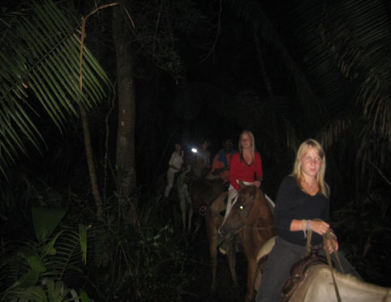 Moonlight Jungle Ride