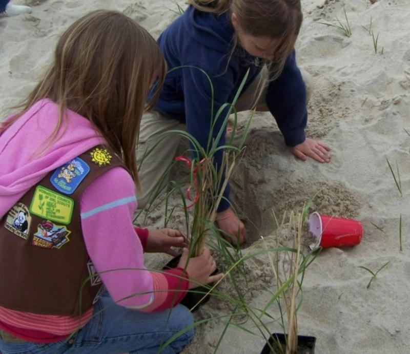 Girl Scouts planting beachgrass