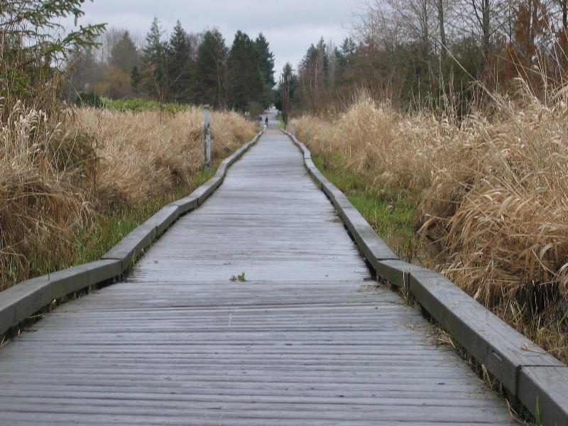 N Creek Boardwalk