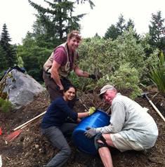 garden stewards nz forest