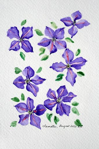 clematis watercolor