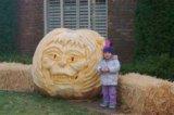 pumpkin leno