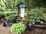 plant donations scene
