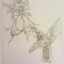 hummingbird mcdaris