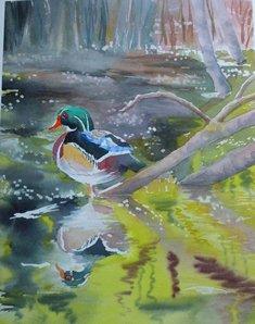wood duck hashimoto