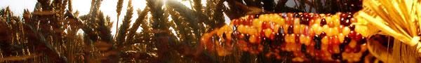 seasonal_corn.jpg