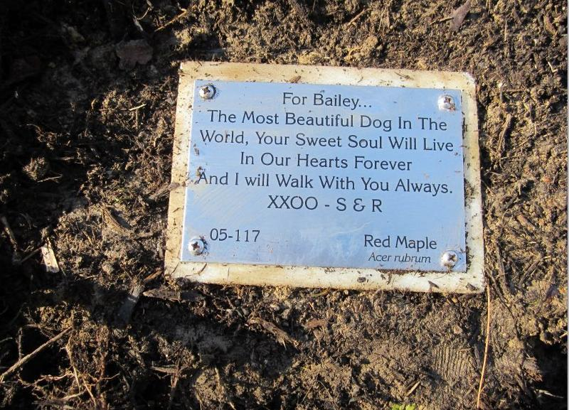bailey's tree dedication