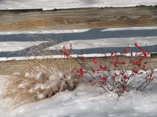 Grasses and Winterberry in the Snow