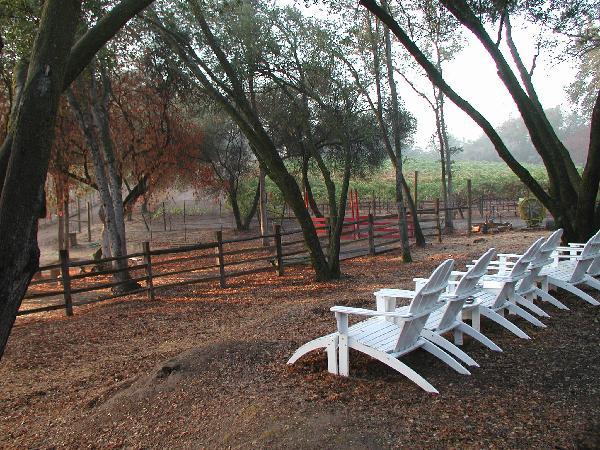 adirondaks in vineyard
